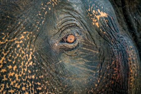 Sluit omhoog beeld van het oog van de olifant