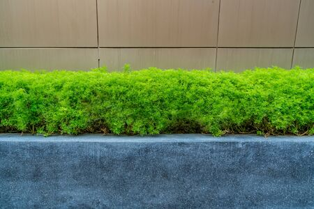Green trimmed plant  in black concrete with gravel block