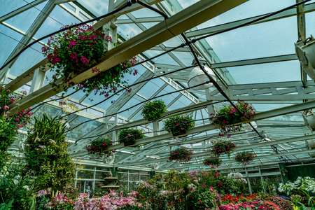 Structure of green house roof with colorful flowers and concrete pathway
