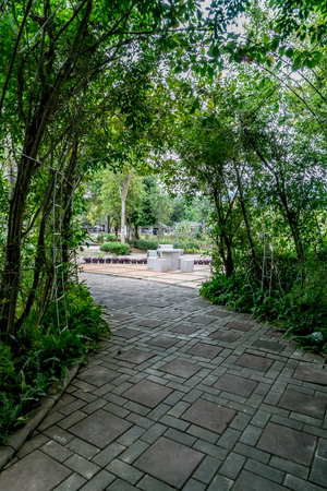 Green tunnel of plants with concrete pathway 스톡 콘텐츠