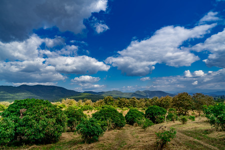 Mountain and forest with white cloud on blue sky background Reklamní fotografie