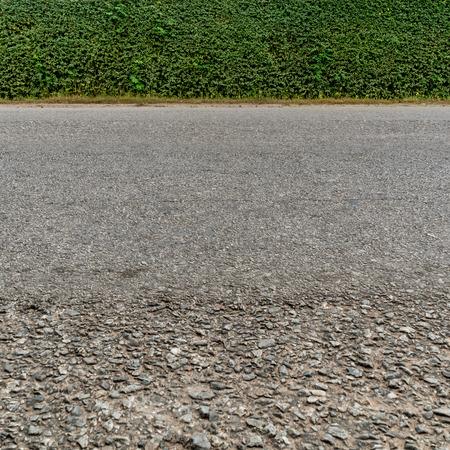 Green hedge fence and  asphalt road