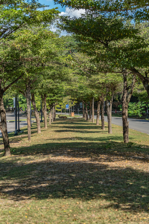 Row of green trees in the car park
