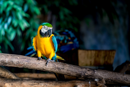 Image of Colorful macaw on branch