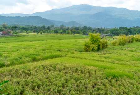 Mountain and forest with rice paddy field in countryside of Thailand
