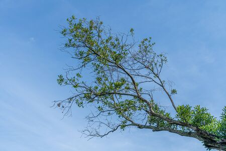 Part of green tree on blue sky background