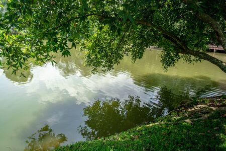 Green tree tilted over green pond Reklamní fotografie