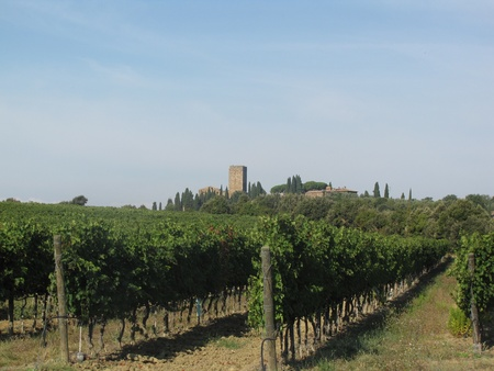 Vineyard in Italy Stock Photo - 11323256