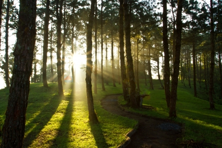 jungle foliage: Morning light at pine forest in National Park of thailand Stock Photo