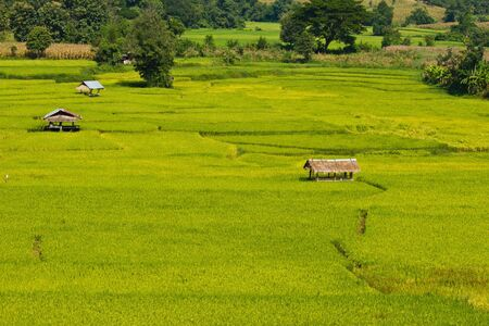 Rice field at Northern of Thailand Stock Photo - 15364552