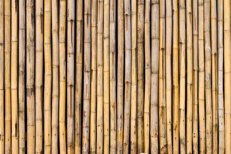 bamboo background: Bamboo wall
