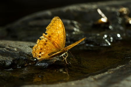 transient: Brown Butterfly at the water fall Stock Photo