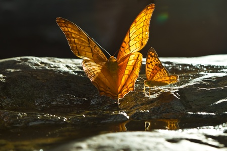 Brown Butterfly at the water fall Stock Photo