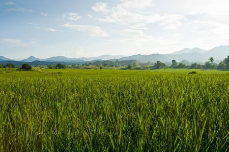 Paddy lush field , Northern of Thailand Stock Photo - 15538380