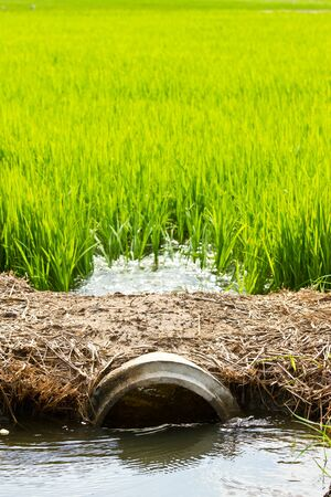 Irrigation in rice field, countryside of Thailand rice field, countryside of Thailand Stock Photo - 15570290