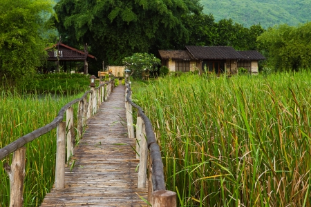 Bridge in grass field, Thailand