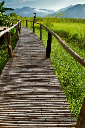 Bridge in grass field, Thailand  photo
