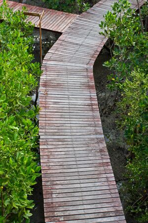 path way amoung the Mangrove forest, Thailand photo
