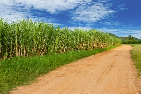 sugarcane: Sugarcane farmland, Thailand Stock Photo