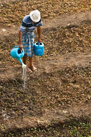 Farmer watered his little plant, thailand