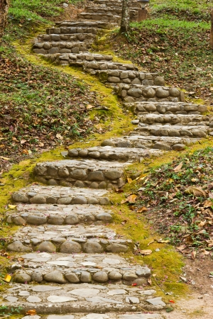 stair among the tropical forest Stock Photo