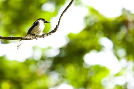 Bird on the tree branch Stock Photo - 15756847
