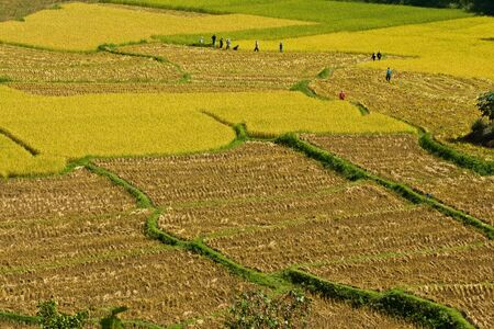 Rice field in Northern of Thailand Stock Photo - 15756614