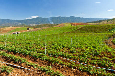 Agriculture valley, Northern of Thailand Stock Photo