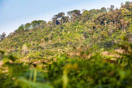 Hill Evergreen forest, Phu Hinrongkla national park, Northern of Thailand