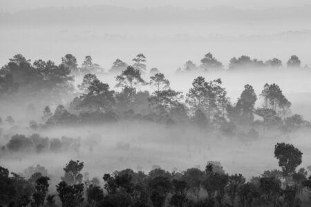 Morning in savannah, Tung Slanglung National park, Northern of Thailand