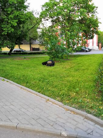 The worker sleeps under the tree at the break. homeless sleeping on the lawn on a summer day. 版權商用圖片