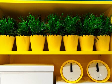 vintage yellow alarm clock without number isolated on green plants in a yellow metallic pot
