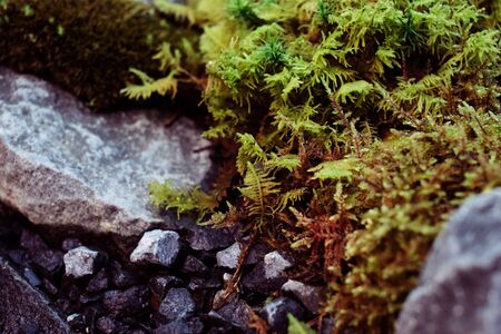 moss live composition grown in a greenhouse. Moss formed as if the forest in miniature. Space for your text Zdjęcie Seryjne