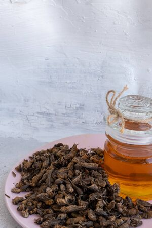 Tuberculosis. folk remedy for treatment of tuberculosis a mole cricket mixed with honey. Recipe for treatment of tuberculosis of the lungs with dried Asian mole cricket is an insect