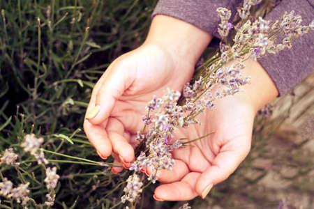 Lavender flower bouquet on a purple background. Woman hands preparing a bouquet of summer flowers. Top view Imagens