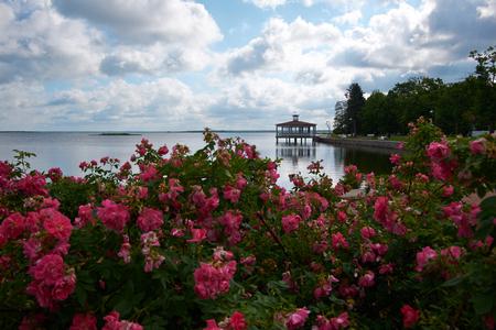 rose garden: view to haapsalu promenad