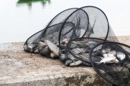 fisher animal: fishnet