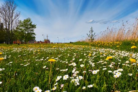 Natural green park Stock Photo