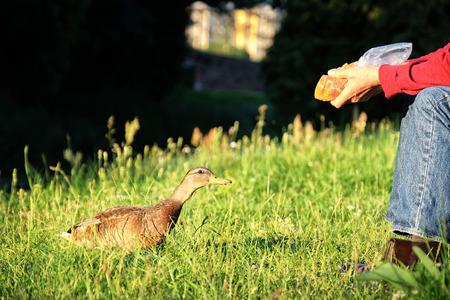 A man is feeding a duck