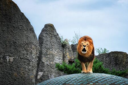 a roaring lion on a stone