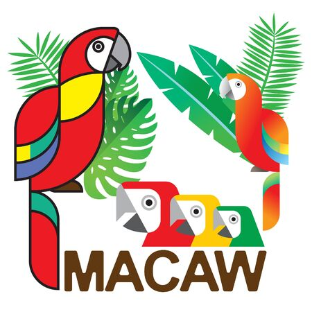 macaw: Colorful Macaw graphic