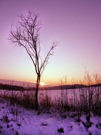 lizenzfreie fotos: Einsamer Baum im Winter violetten Sonnenuntergang vertikale Foto