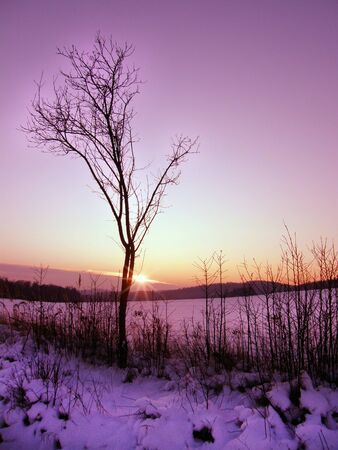 royalty free photo: Lonely tree in winter violet sunset vertical photo