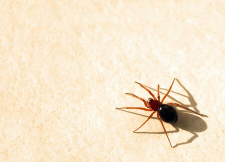 free photos: Red spider sittin on beige paper with copy space