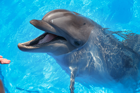 Smiling dolphin. dolphins swim in the pool