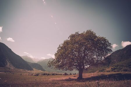 Massive oak tree with grass and sun light Reklamní fotografie - 130789500