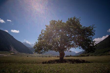 Massive oak tree with grass and sun light. North Caucasus