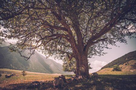 Massive oak tree with grass and sun light Reklamní fotografie