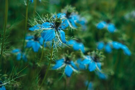 A young blue flower inside a larger bloom and with light coming in between thee flowers. Extremely shallow depth of field for dreamy feel.