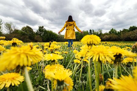 Portrait of a beautiful woman in a yellow cloak on a field of flowering dandelions. Stormy sky in spring